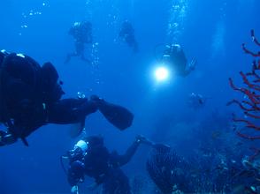 Dive center blu immersioni diving marina di campo isola d 39 elba e pianosa - Dive center blu ...